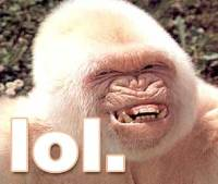 LOL-AlbinoGorrilla.jpg