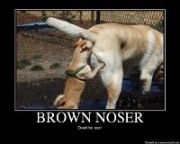 BROWNNOSER.png